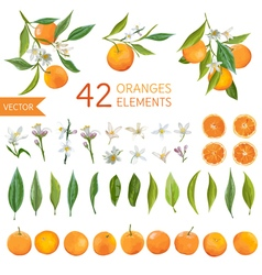 Oranges Flowers and Leaves Lemon Bouquetes vector
