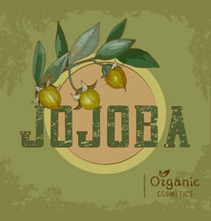 Vintage jojoba plant design for organic cosmetics vector