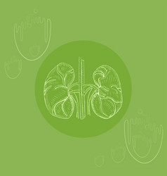 white human kidneys vector image