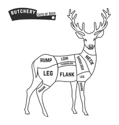 Deer meat cuts vector image
