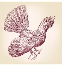 Wood Grouse hand drawn llustration vector image vector image