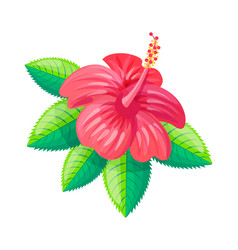 Hibiscus flower tropical style vector