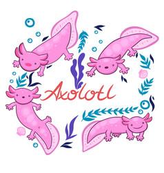 Set axolotl isolate on a white background vector