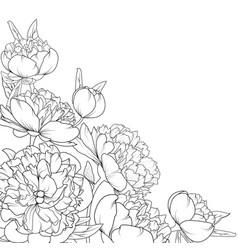 peony rose garden flowers composition corner frame vector image vector image