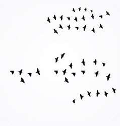 birds fly south vector image