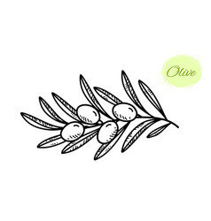 Black hand drawn olive branch with leaves vector