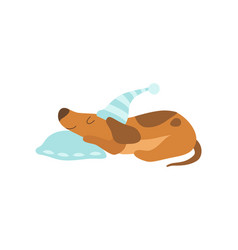 cute dachshund dog animal sleeping on pillow vector image