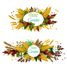 grains food cereal vegetable and seeds vector image