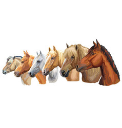set of horses breeds 5 vector image
