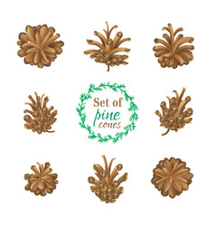 Set of pine cones isolated on white background vector