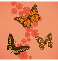 Butterfly near the flowers vector image vector image