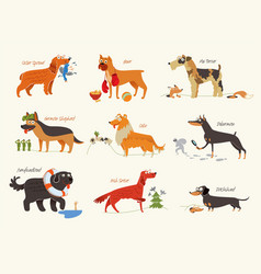 dog breeds working dogs vector image