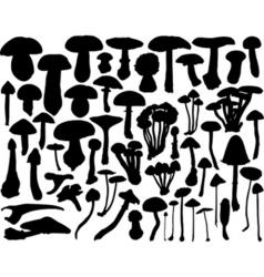 Fungi vector