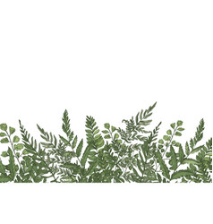 Horizontal background with beautiful ferns wild vector