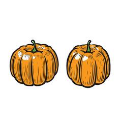 pumpkin symbol vegetables cartoon vector image