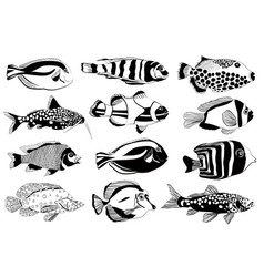 Set of aquarium fish black and white design vector