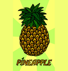 stylized pineapple on beautiful background vector image