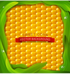 Background Yellow corn green leaves around vector