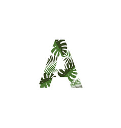 logo letter a tropical leaves vector image