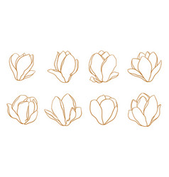 Set blooming magnolia buds in gold color vector