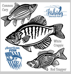 white crappie common carp and red snapper vector image