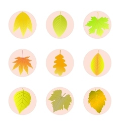 Set of icons autumn leaves vector image