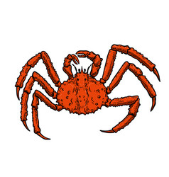 king crab isolated on white background design vector image