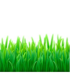 realistic fresh spring green grass field vector image