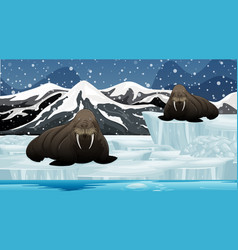 Scene with two walruses on oice vector