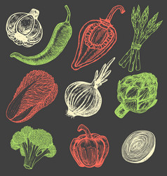 set hand drawn elements sketch style vegetables vector image
