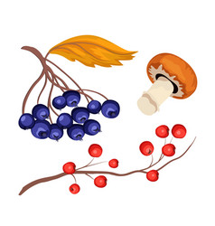Sketch rowanberry and blue berry mushroom vector