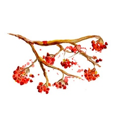 watercolor painting - rowan berry branch vector image