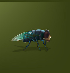 fly insect vector image