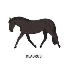 Kladruber breed horse flat vector