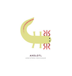 Mexican axolotl isolated animal cartoon vector