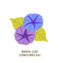 Morning glory tropical flower vector