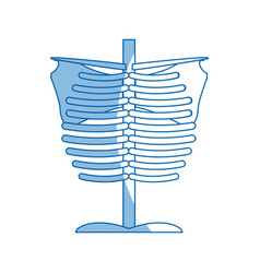 Skeleton chest human part anatomy vector