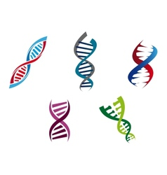 Colourful DNA strands vector image