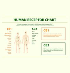 Human receptor chart horizontal infographic vector