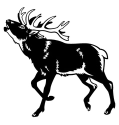 Red deer black and white vector