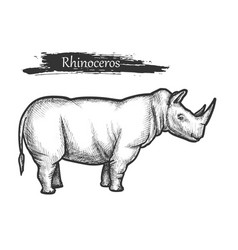 rhinoceros sketch african jungle zoo wild animal vector image