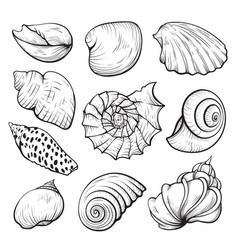 sea shell hand drawn isolated set vector image