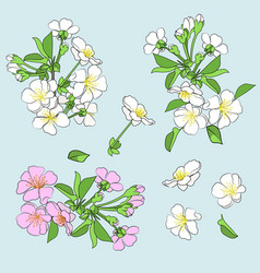 set flowering branches vector image
