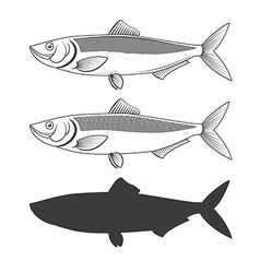 Set of herring fish vector image