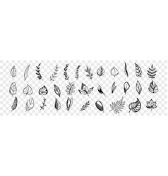 different hand drawn tree leaves set collection vector image