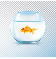 Golden fish bowl realistic transparent vector