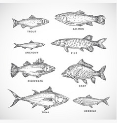 Hand drawn ocean or sea and river fish set a vector