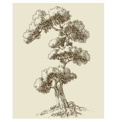 oak tree hand drawn vector image