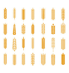 Wheat rye and barley ear set vector