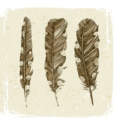 Hand drawn dotted feathers in vintage style vector image